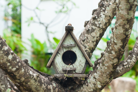 Classic wooden birdhouse on tree in park