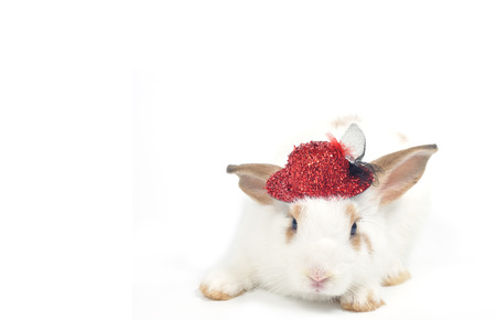 White rabbit isolated on white background wear red cute hat.