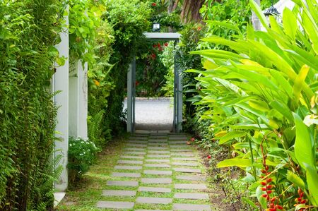 Walkway in garden, home yard gardening design with green plant and bird of paradise flowers.