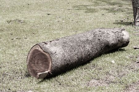 Deforestation, single tree log on yard in garden,