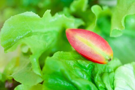 Green mix Salad healty meal Stockfoto