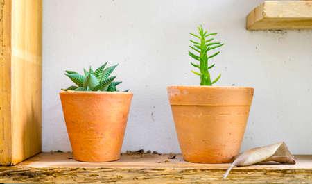 flowerpots: little flowerpots on the wodden shelf