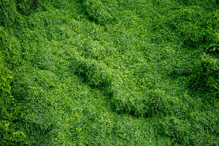 disordered: cover crop are overgrown in the jungle