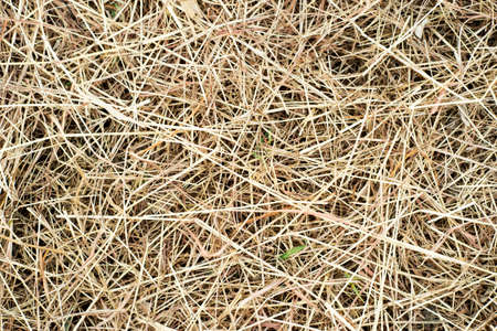 straws: Straws on ground 1 Stock Photo