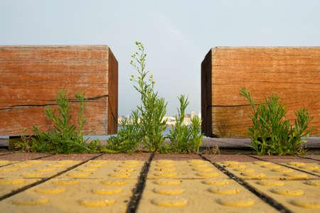 녹색 식물 보도에 벽돌 사이 성장합니다.