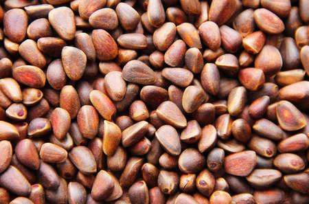 Pine nuts - small seeds of Siberian cedar pine.
