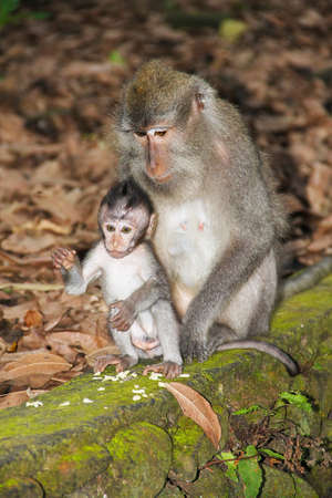 Two monkeys - the mother and the child are sitting on a stone parquet, overgrown with moss.