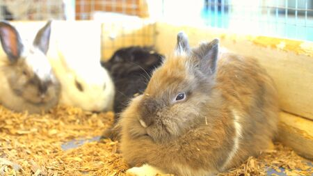 Beautiful, young, tricolor, little rabbit. Rabbits in a pen at the zoo