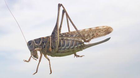 Locusts against the blue sky. grasshopper against the blue sky.