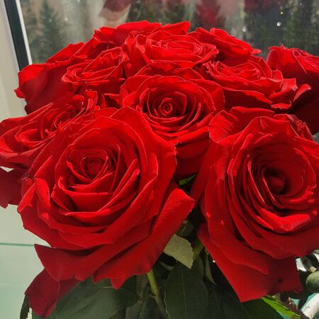 bright red rose blossomed beautifully. A bouquet of roses