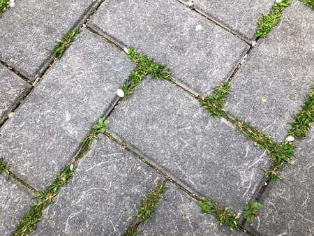 square mesh block, concrete stone or marble tile. Sidewalk tiles with green grass in the garden, used for background and texture.