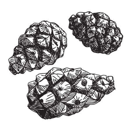 Set of pine cones. black contour on a white background.  Vector
