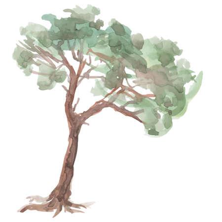 asian gardening: pine tree on a white background.  Illustration