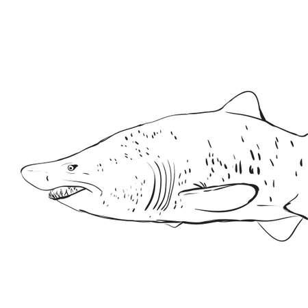 Great White Shark Underwater. Vector