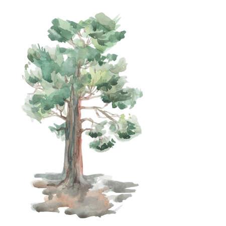 pine tree on a white background.  向量圖像