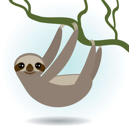 pus: Three-toed sloth on green branch on white background.