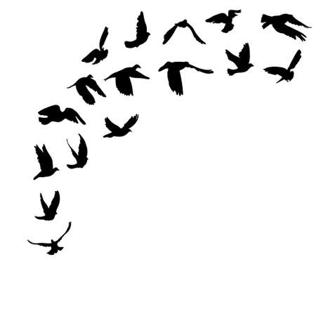 Doves and pigeons set for peace concept and wedding design. Vector illustration