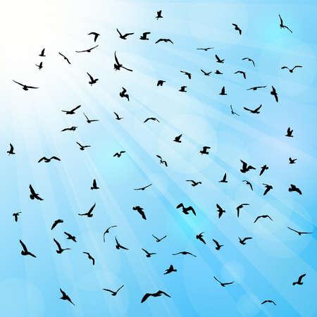gulls: Birds, gulls, black silhouette on blue background. Vector illustration