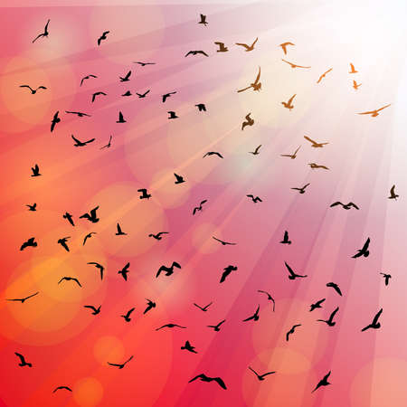 mew: Birds, seagulls silhouette in the rays on pink background, sunset, dawn. Vector illustration Illustration