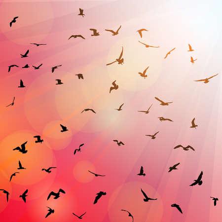 mew: Birds, seagulls black silhouette on pink background, sunset, dawn. Vector illustration Illustration