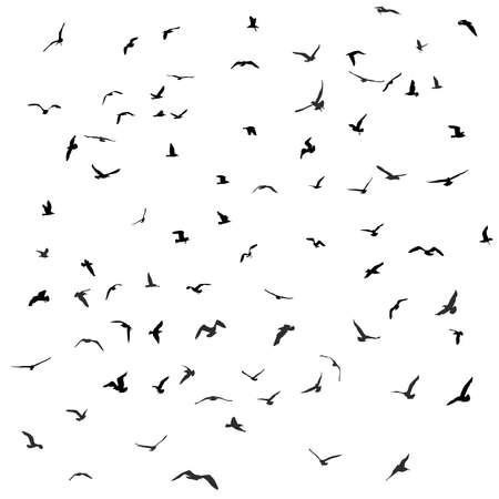 mew: Birds, gulls, black silhouette on white background Vector Illustration