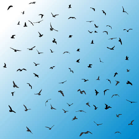 mew: Birds, gulls, black silhouette on blue background. Vector illustration