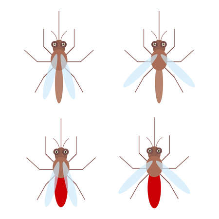 dipterus: set of mosquitoes with blood, Isolated on white background, flat style. Vector illustration