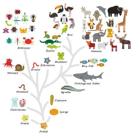 dinosaurio caricatura: Evoluci�n en biolog�a, evoluci�n esquema de los animales aislados sobre fondo blanco. la educaci�n de los ni�os, la ciencia. Escala Evoluci�n del organismo unicelular hasta los mam�feros. Ilustraci�n vectorial