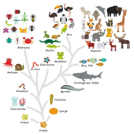 Evolution in biology, scheme evolution of animals isolated on white background. children's education, science. Evolution scale from unicellular organism to mammals. Vector illustration