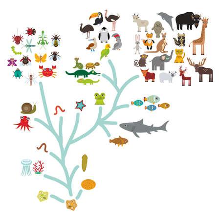 evolucion: Evolución en biología, evolución esquema de los animales aislados sobre fondo blanco. la educación de los niños, la ciencia. Escala Evolución del organismo unicelular hasta los mamíferos. Ilustración vectorial