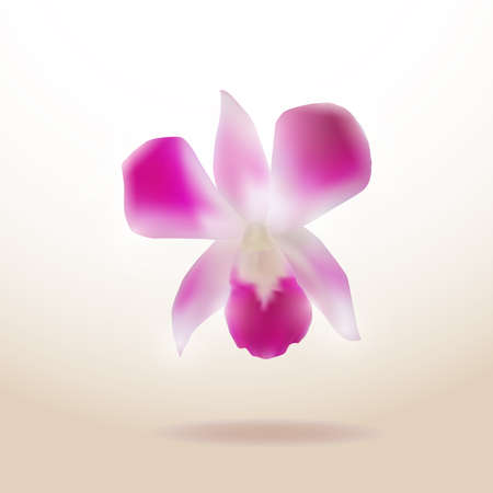 orchid isolated: Beautiful Orchid isolated on white background. Vector illustration