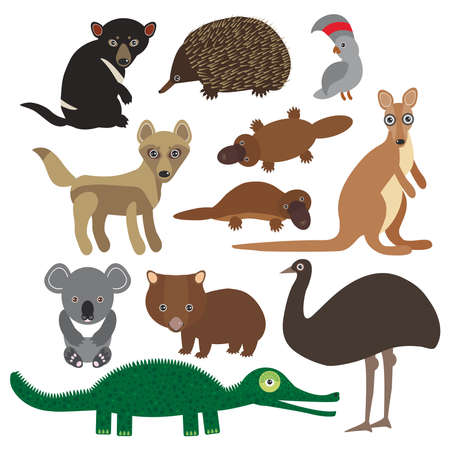 platypus: Animals Australia: Echidna Platypus ostrich Emu Tasmanian devil Cockatoo parrot Wombat crocodile kangaroo dingo. Vector illustration