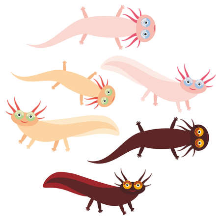 amphibia: Cute orange pink brown Axolotl Cartoon character (Mexican salamander, Ambystoma mexicanum) aquarium animal on white background. Vector illustration