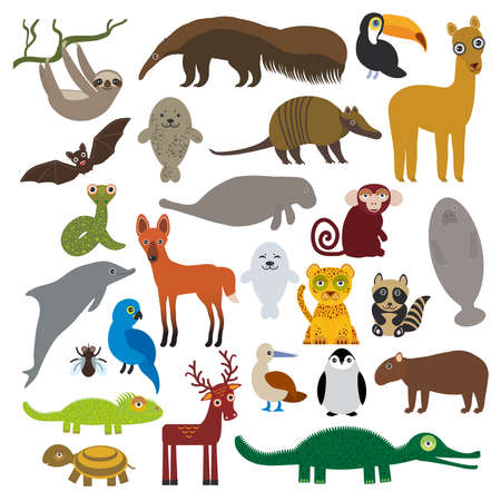 South America sloth anteater toucan lama bat fur seal armadillo boa manatee monkey dolphin Maned wolf raccoon Hyacinth macaw lizard turtle crocodile deer penguin Blue-footed booby Capybara. Vector illustration