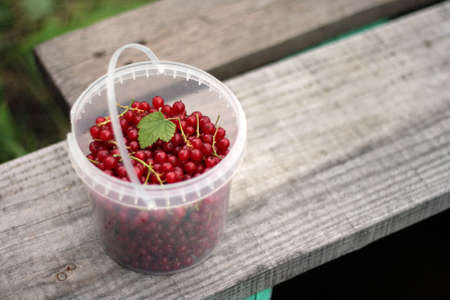 plastic cup: Ripe red currants in white plastic cup on wooden table Stock Photo