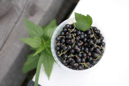 plastic cup: Fresh ripe black currants in a white plastic cup on white background