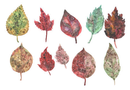 Watercolor set of autumn leaves, paint stains.