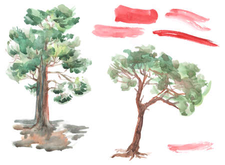 tree: pine tree on white background. Red brush strokes set Watercolor. Sketch