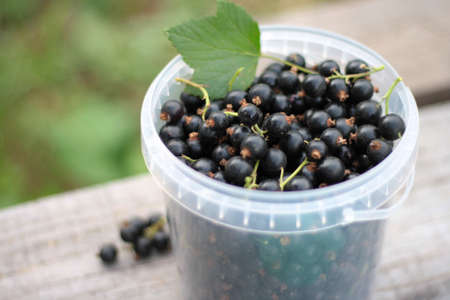 plastic cup: Fresh ripe black currants in a white plastic cup on wooden table Stock Photo
