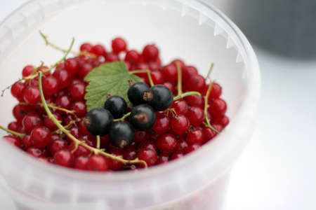 plastic cup: Ripe red currants in white plastic cup on white background