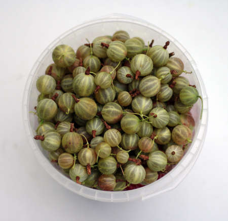 plastic cup: green ripe gooseberries in white plastic cup on white background