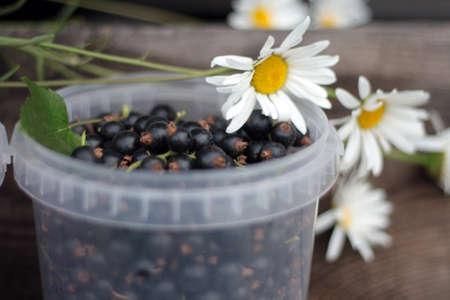 plastic cup: Fresh ripe black currants in a white plastic cup on wooden table and flower daisies