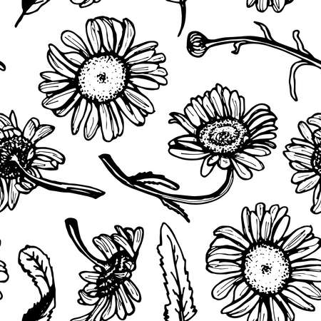 camomile tea: Beautiful vintage background with black daisies seamless patern on white background. Vector illustration Illustration