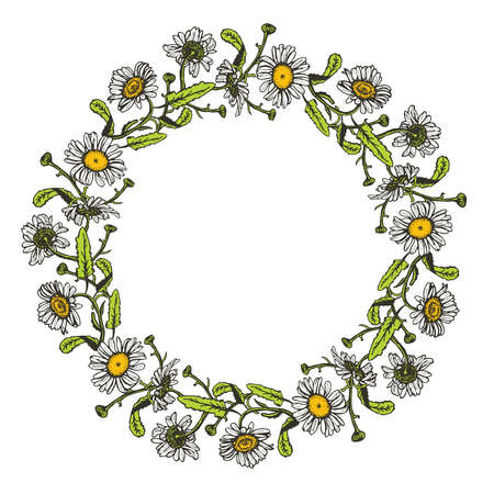 camomile tea: beautiful vintage round wreath of daisies - background, frame for text on white background. Vector illustration
