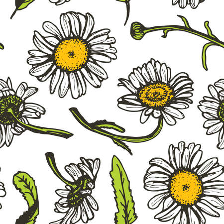 pencil drawings: Beautiful vintage background with black daisies seamless patern on white background. Vector illustration Illustration