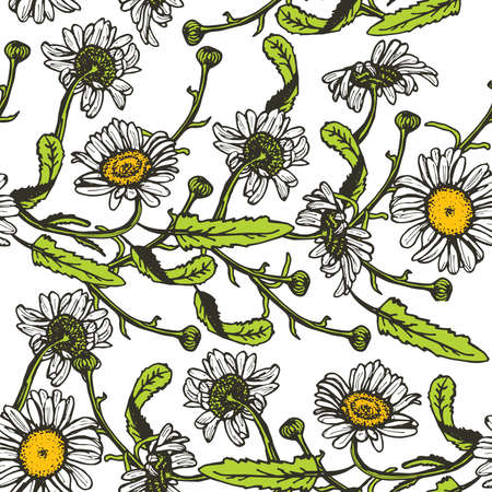 nature vector: Beautiful vintage background with black daisies seamless patern on white background. Vector illustration Illustration