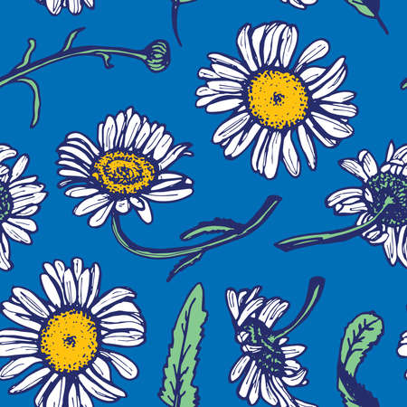 camomile tea: Beautiful vintage background with white daisies seamless patern on blue background. Vector illustration