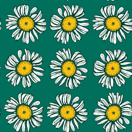 camomile tea: Beautiful vintage background with white daisies seamless patern on green background. Vector illustration