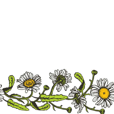 camomile tea: Beautiful vintage background with black daisies on white background. Vector illustration Illustration