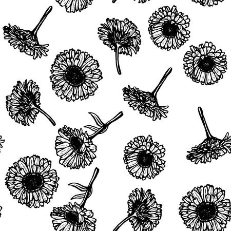 calendula: calendula flowers, sketch seamless pattern, black contour on white background. Vector illustration Illustration